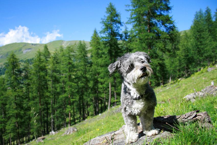 dog-trekking-passeggiata-montagna-zainetto-per-cani-cosa-portare-in-montagna-con-il-cane
