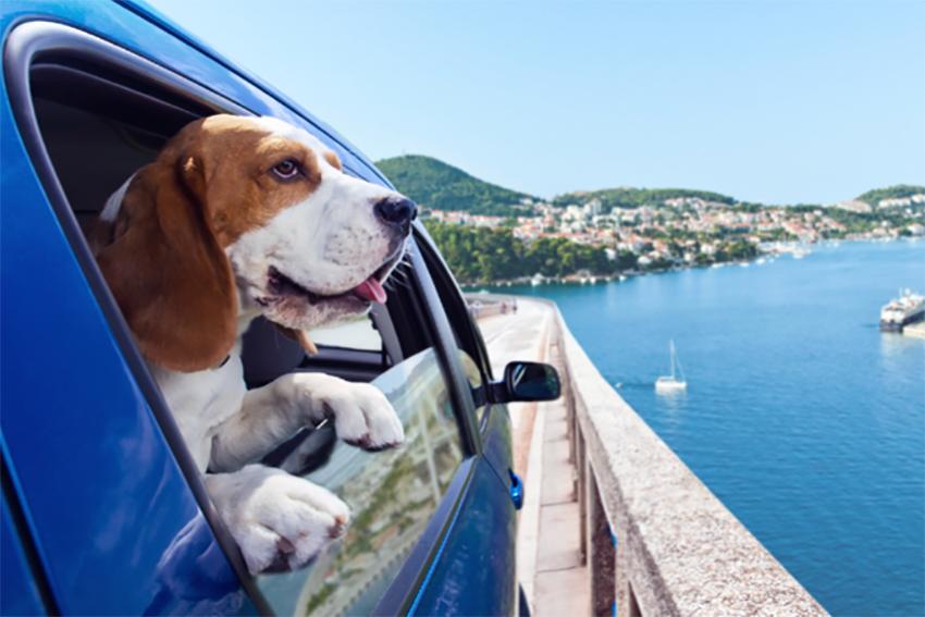 andare-vacanza-animali-viaggiare-pensioni-pet-friendly