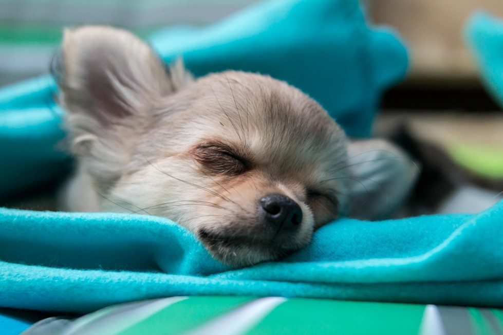 disabituare-cane-dormire-letto-cane-dorme