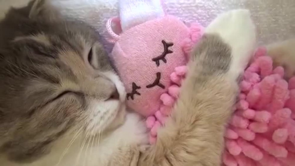 gatti-pupazzetti-peluche-ferplast
