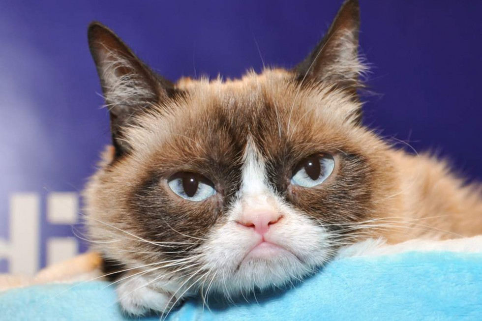 """""""Grumpy Guide To Life: Observations From Grumpy Cat"""" Book Event At Indigo"""