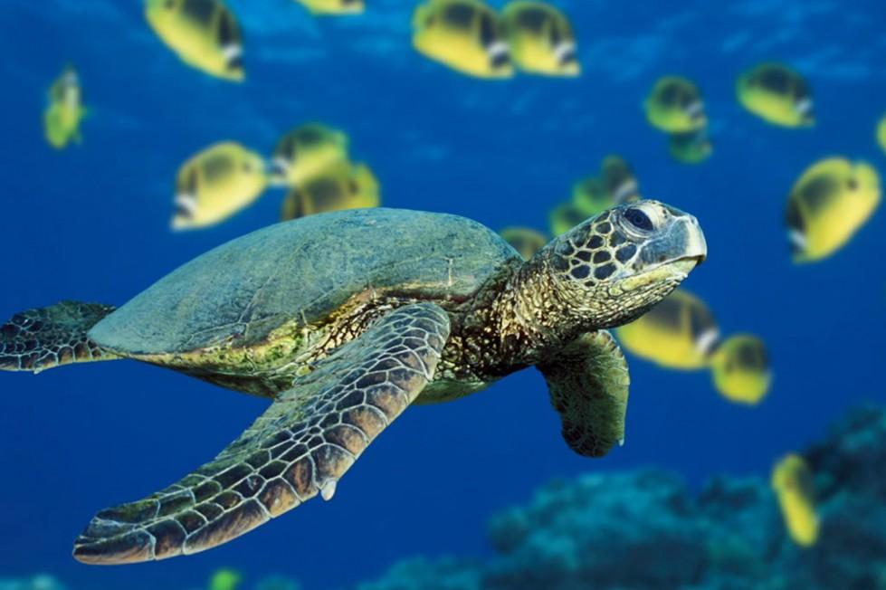 tartaruga-acquatica-adottare-cosa-fare-haiti-arclight-ferplast