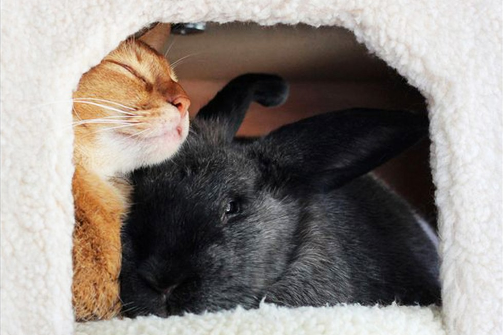 dodo-dolci-animali+coniglio-e-gatto-teneri-insieme-ferplast