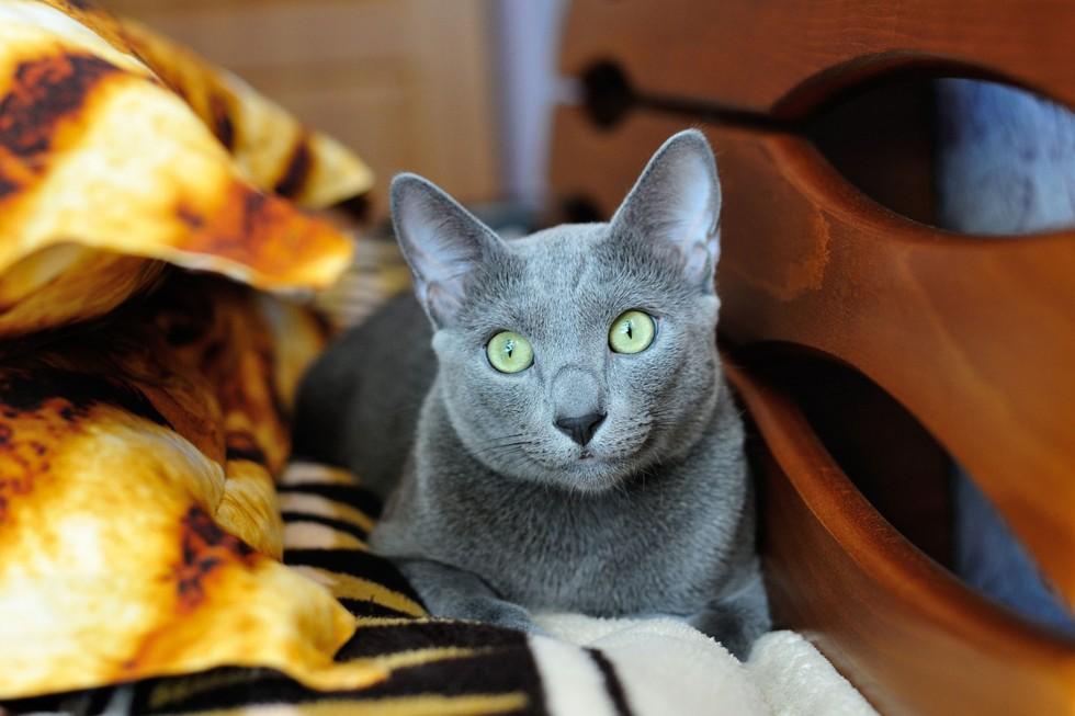 gatto_arrabbiato-cosa-fa-arrabbiare-il-gatto