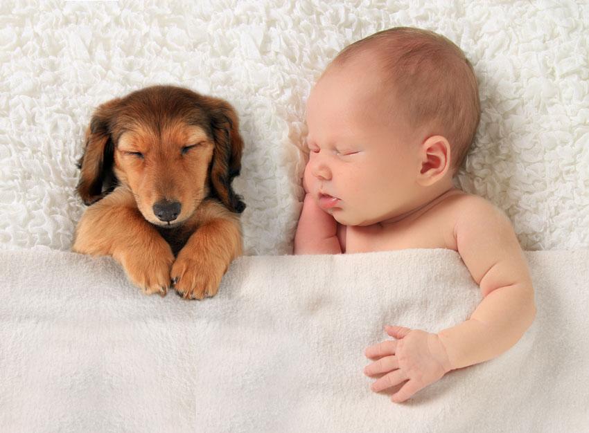 bimbo piccolo che dorme insieme ad un cucciolo
