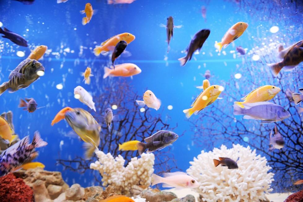 Pesci e acquario quali scegliere love ferplast for Acquario per pesci
