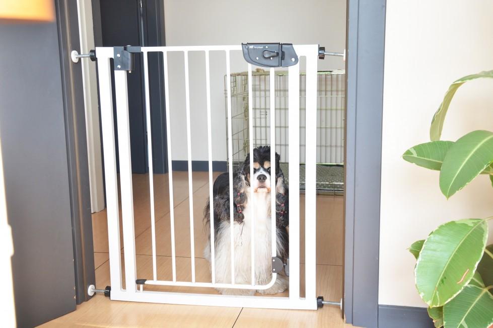 ferplast-cancello-cani-dividere-spazi-casa-dog