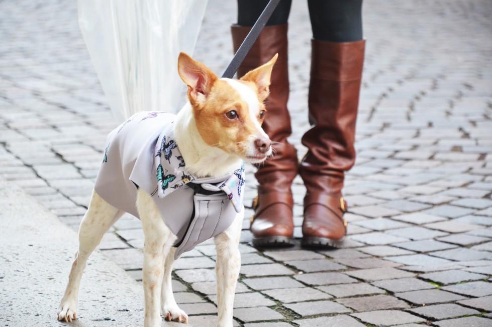 passeggiata-con-cane-pioggia-cappottino-ferplast-antivento
