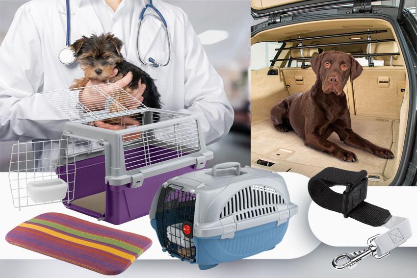 veterinario_perro_trasportadora_separadores_del_coche_cinturones_de_seguridad