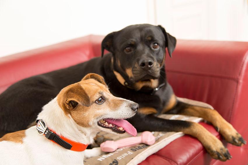proteggere il cane dal freddo Jack Russell e Rottweiler sdraiati su coperta per cani double-face Nanna F di Ferplast