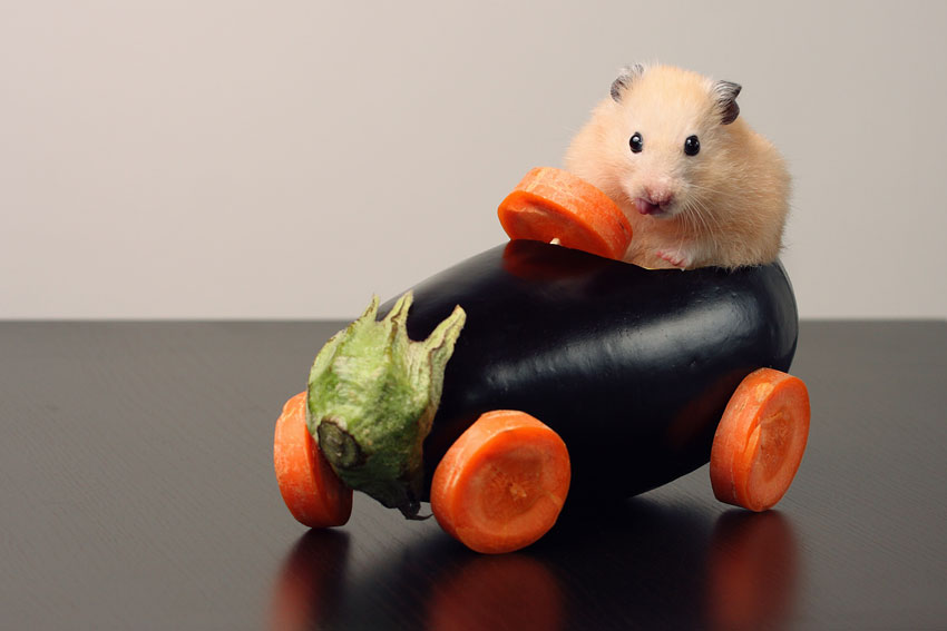 cute hamster on a vegetables made car