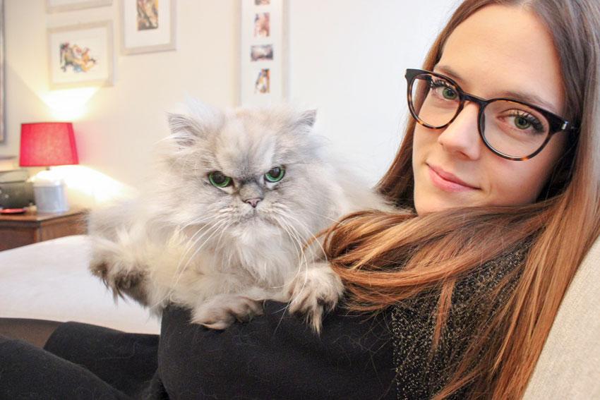gatto Persiano Cincillà in braccio alla padrona