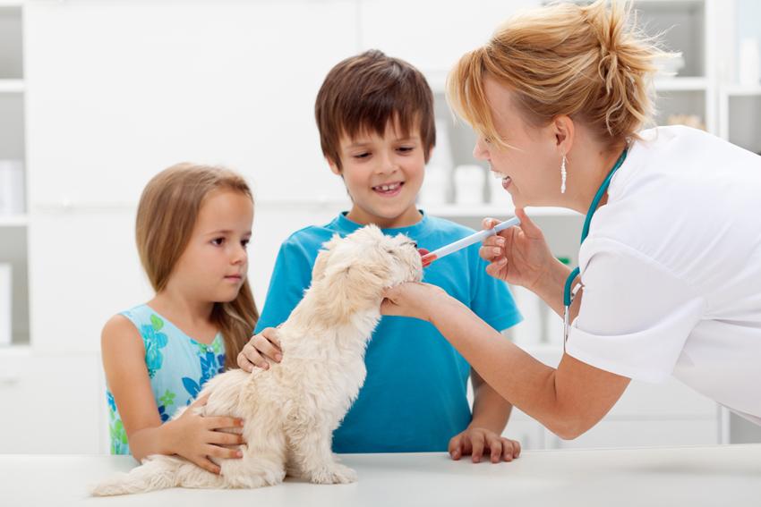 petizione-farmaci-generici-enpa-animali