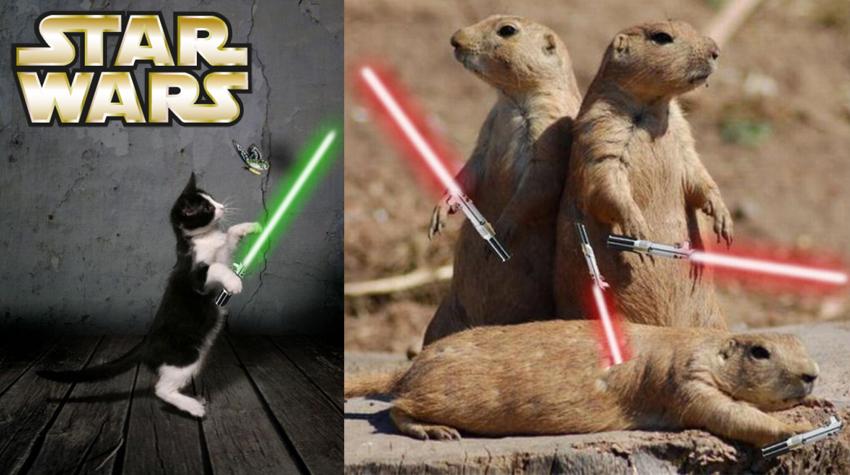 animali-spade-laser