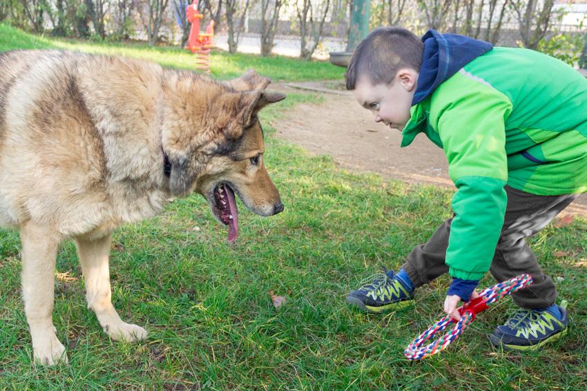 bambino e cane che giocano insieme