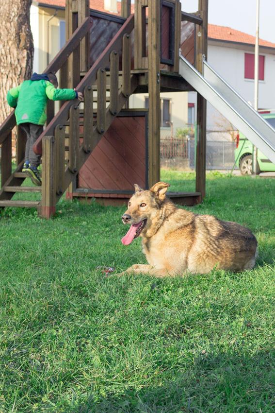 bambino che gioca con il suo cane al parcogiochi