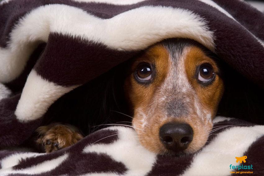 cane-paura-coperta-nascosto-sguardo