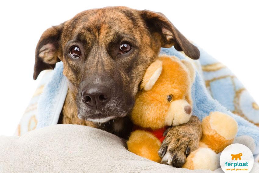 cane spaventato nascosto sotto una coperta con un peluche