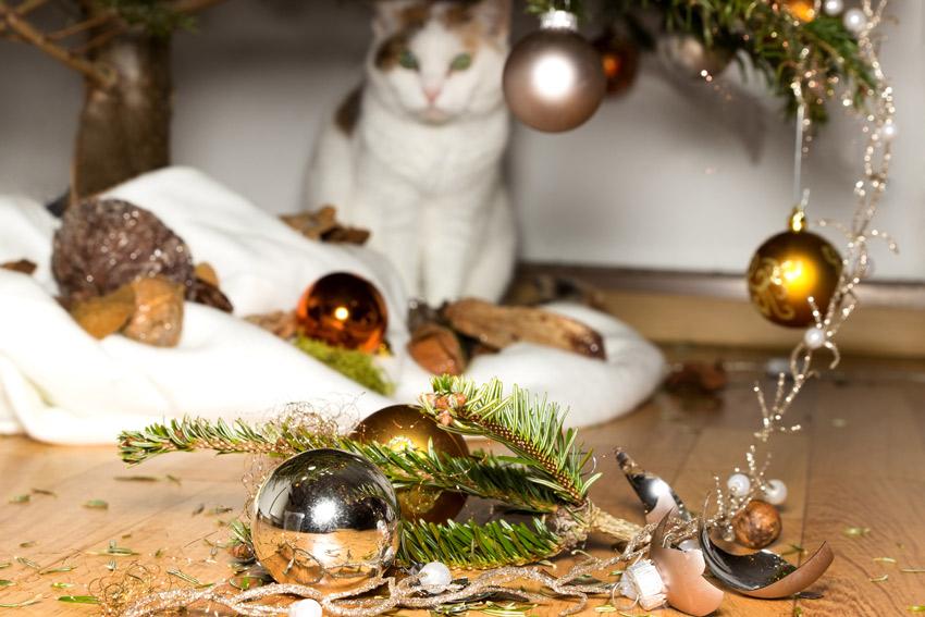 salvare-albero-natale-gatto