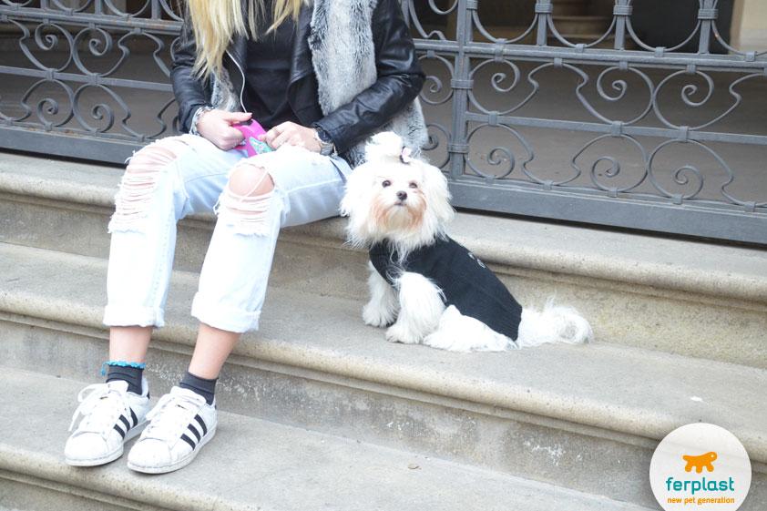 blogger-dogs-maltese