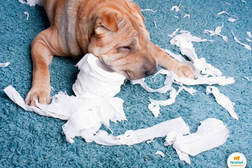 Как научить щенка оставаться дома одному