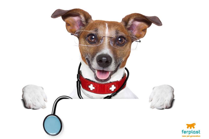 cane di razza jack russell vestito da veterinario