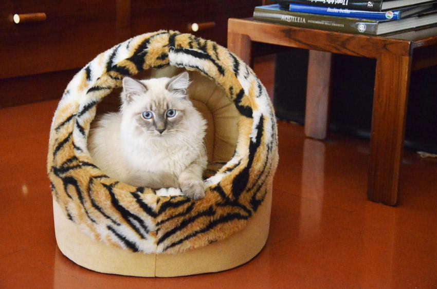 ferplast-cat-bed