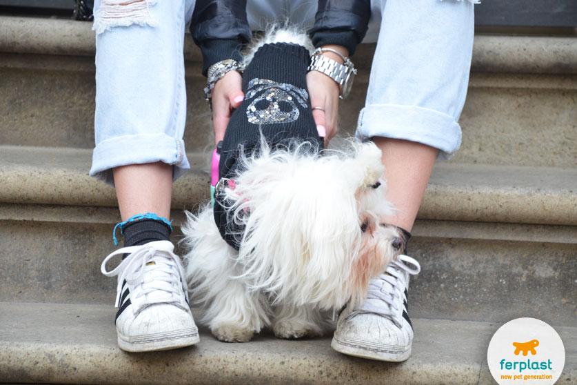 look-cane-abbigliamento-maglione