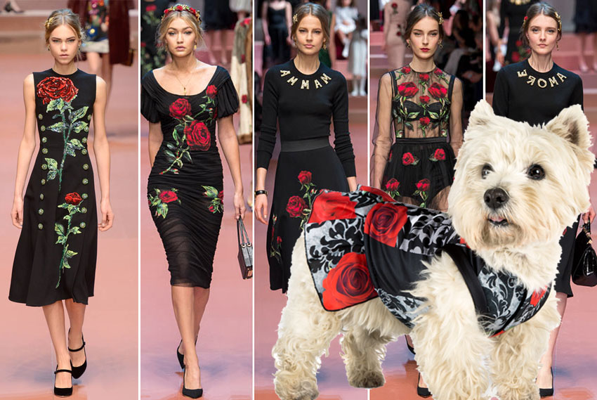 Dolce_Gabbana_fall_winter_2015_2016_collection_Milan_Fashion_Week11 copia