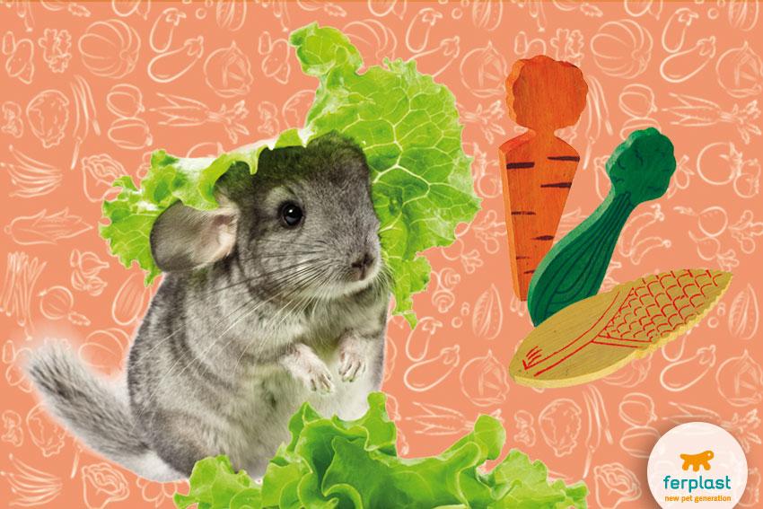 cincillà grigio con lattuga e giochi da rosicchiare a forma di verdure