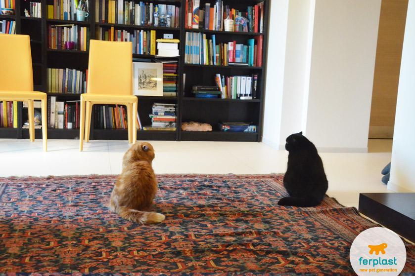 difficile-convivenza-gatti