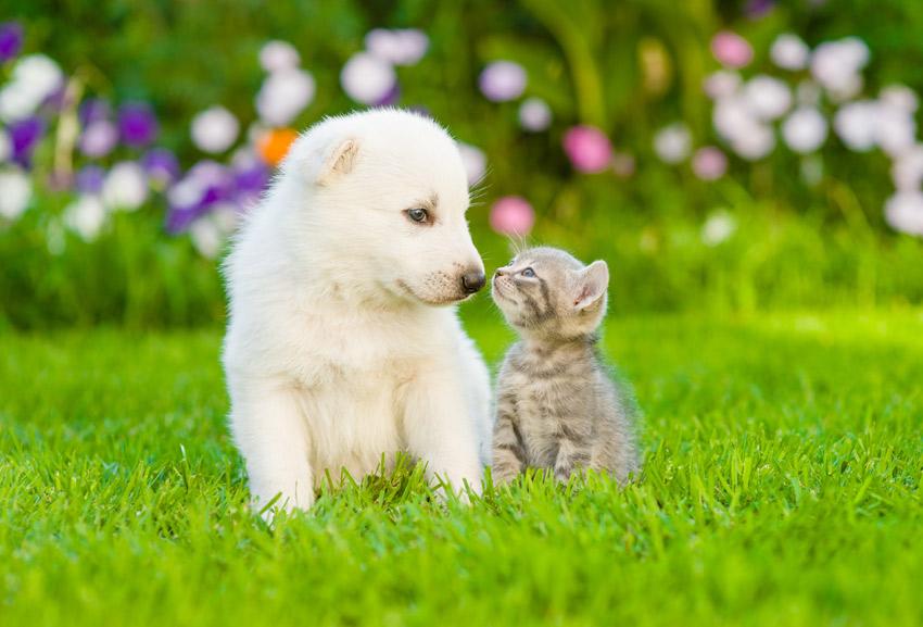 educare-cane-essere-socievole-socializzazione