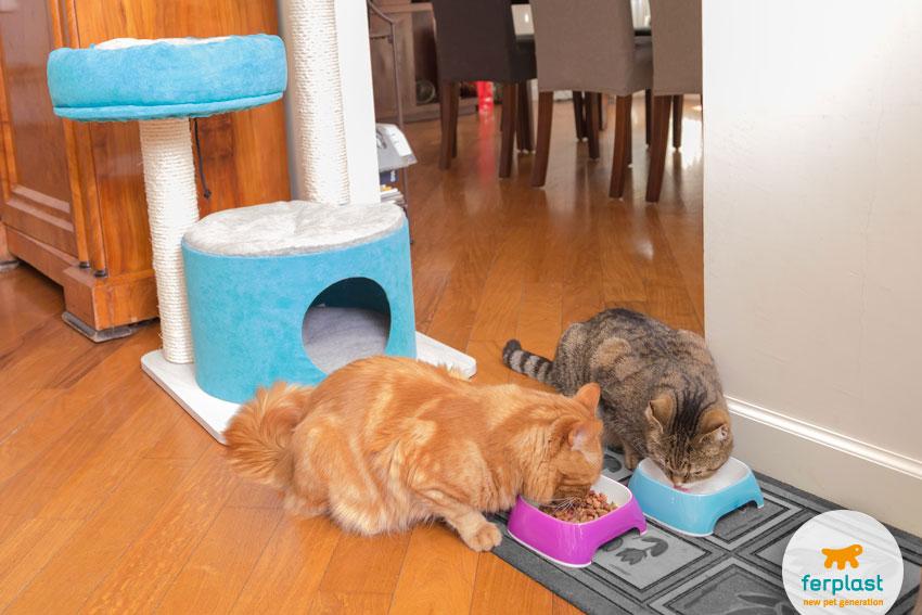 due gatti che mangiano insieme