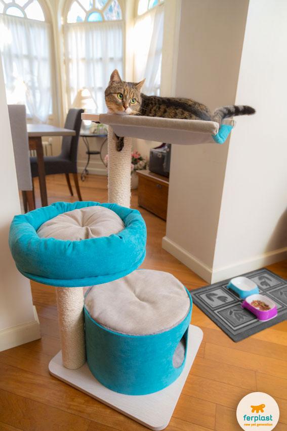 gatto sdraiato sull'amaca di un saltagatto azzurro