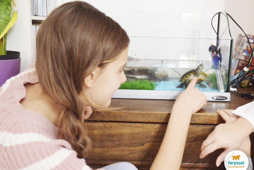 Tartarughe d acqua 5 curiosita 39 love ferplast for Acquario ferplast