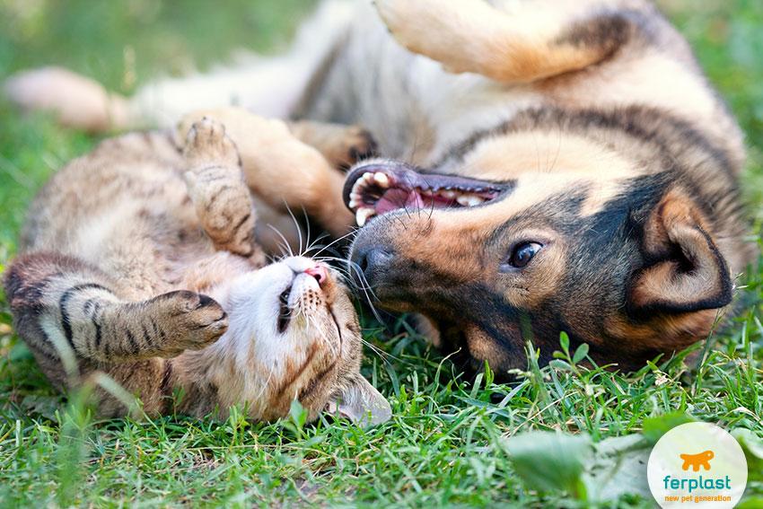 amicizia tra cane e gatto
