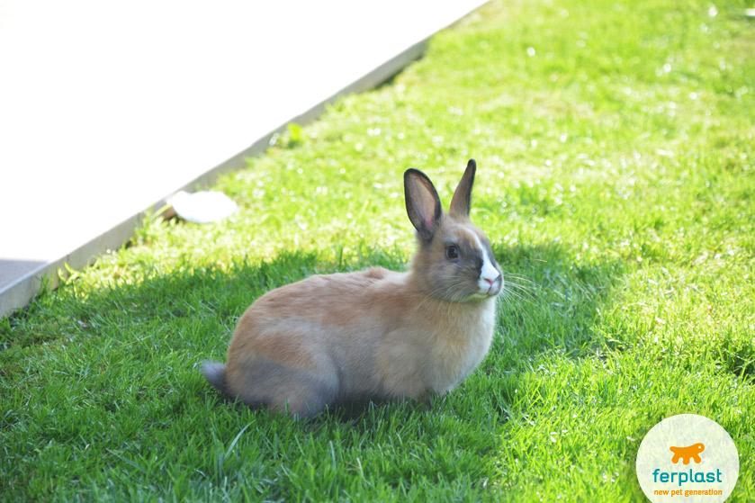 lasciare-libero-coniglio-giardino