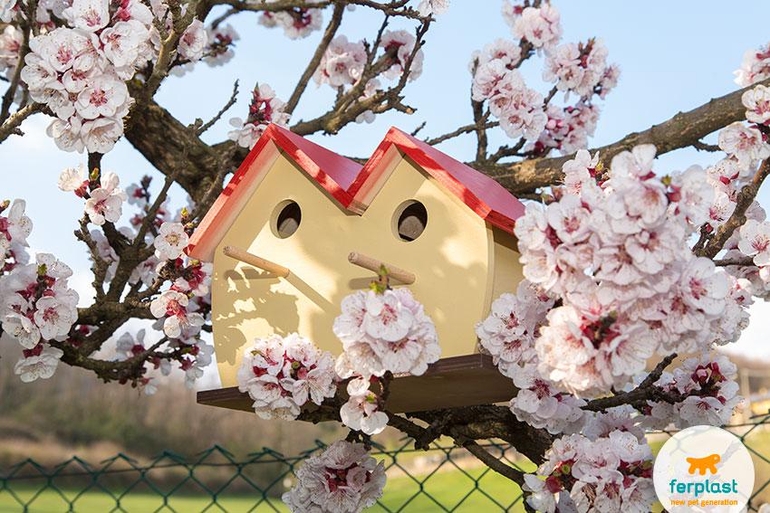 casetta-per-uccellini-fiori-nido