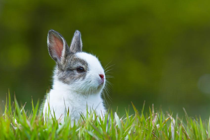come-accogliere-coniglietto