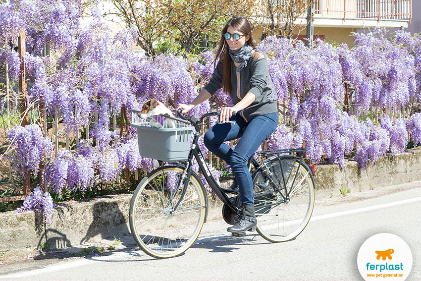 portare il cane in bici