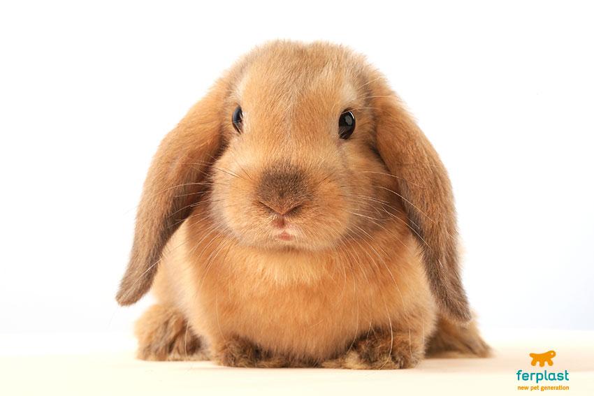 problemi dentali nei conigli