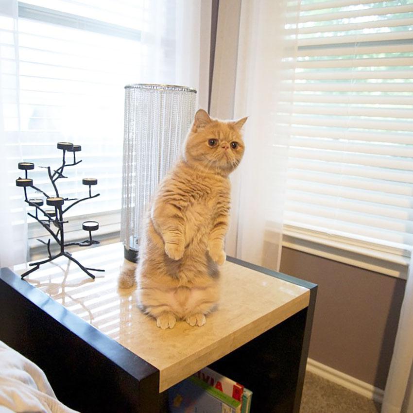 standing_cat