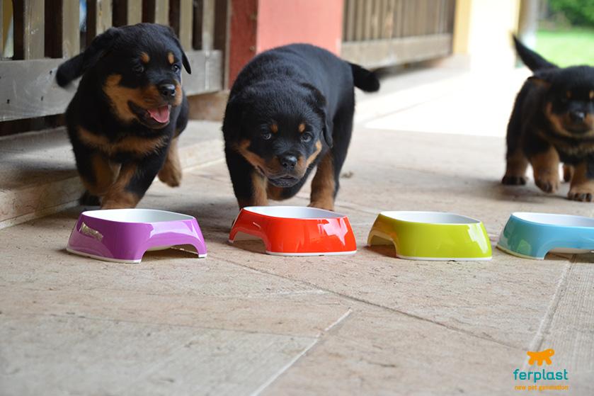 cibo_cuccioli_rottweiler