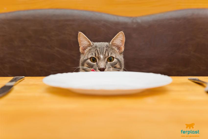 gatto e ciotola ferplast