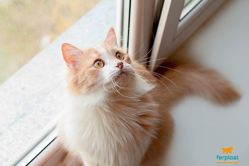 installare una gattaiola portina per gatti