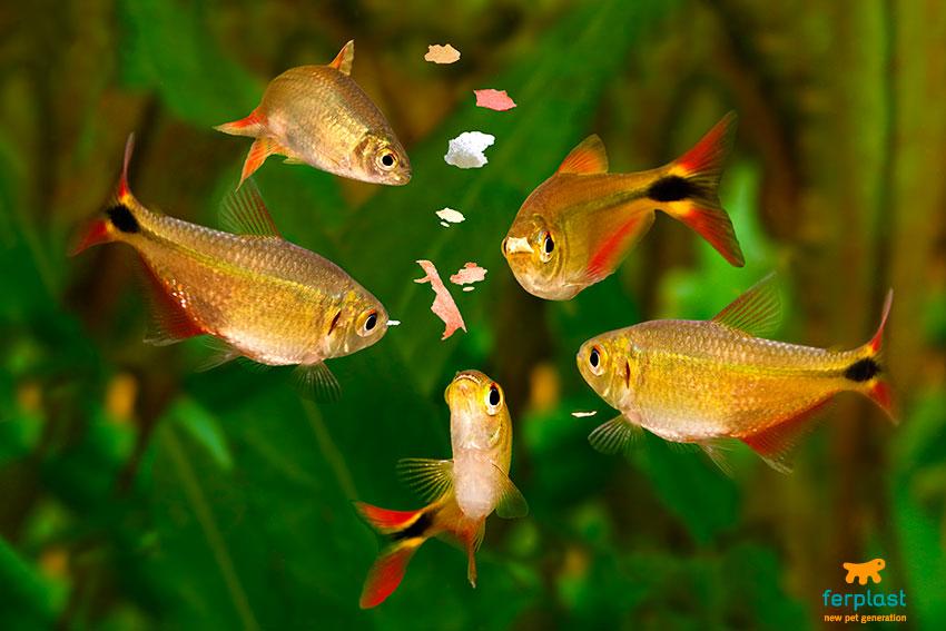 quanto mangiano i pesci