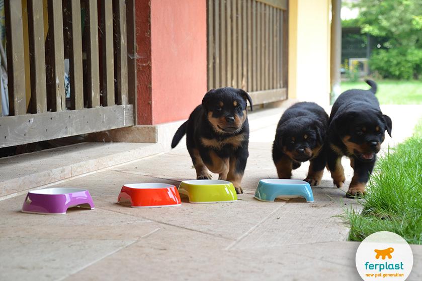 cachorros_rottweiler_ferplast