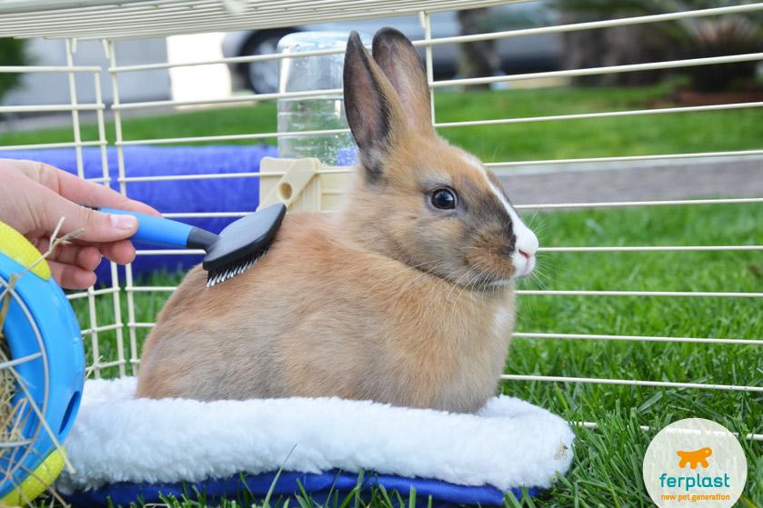 come-pettinare-coniglio