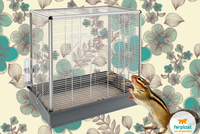 gabbia per scoiattoli giapponesi o tamia