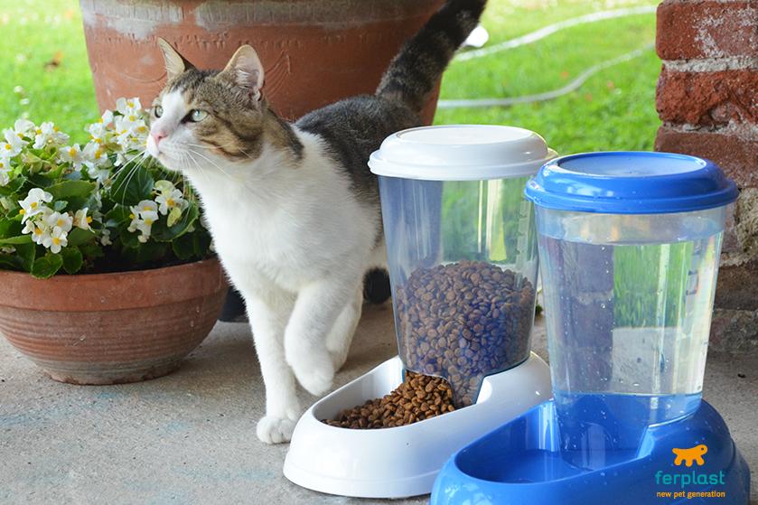 Dispenser de comida para gatos